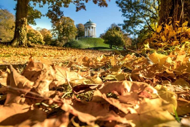 Herbstlaub auf Waldboden
