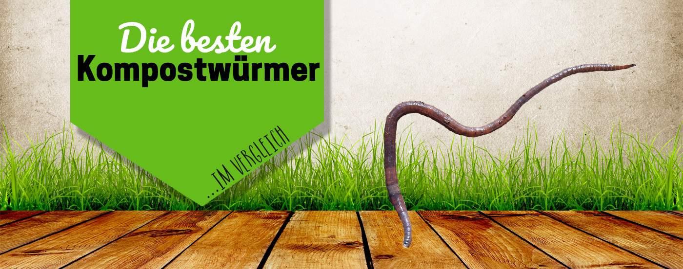 Kompostw Rmer die besten kompostwürmer für deinen kompost pflanzentanzen de