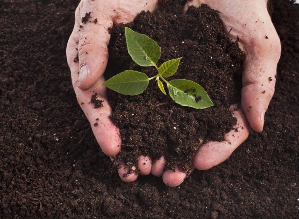 Zwei Hände habe frische Komposterde in der Hand