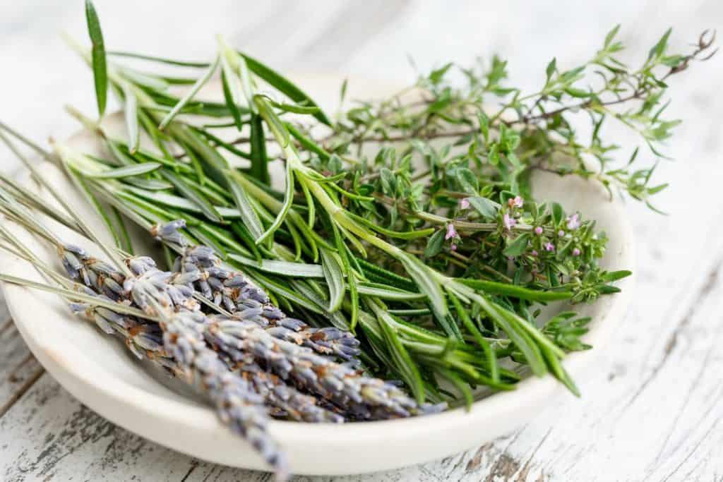 Rosmarin, Lavendel und Thymian auf Teller