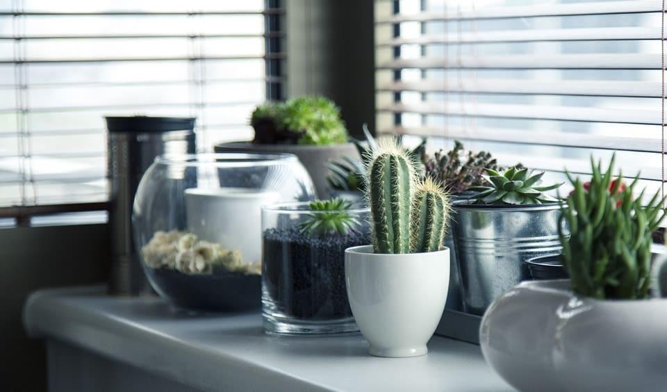 alles ber sukkulenten pflegeleichter exotischer. Black Bedroom Furniture Sets. Home Design Ideas
