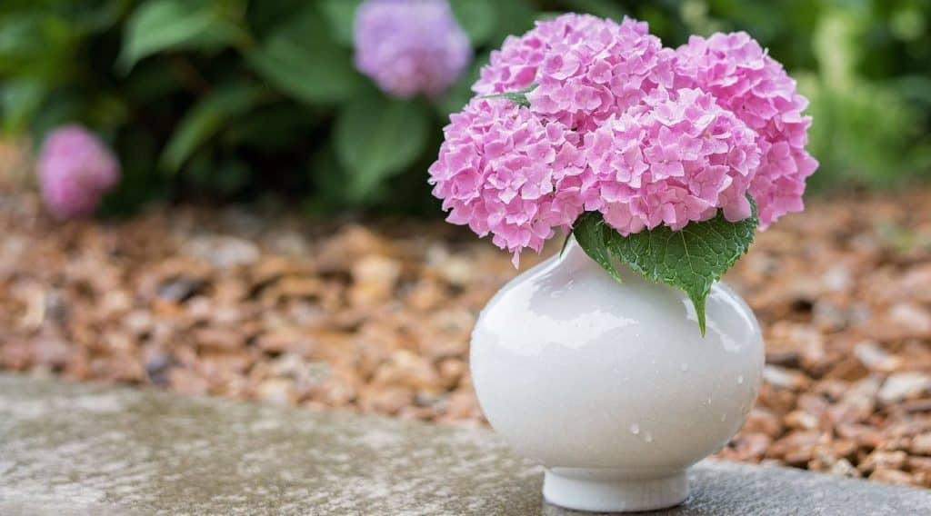Vase mit Hortensie