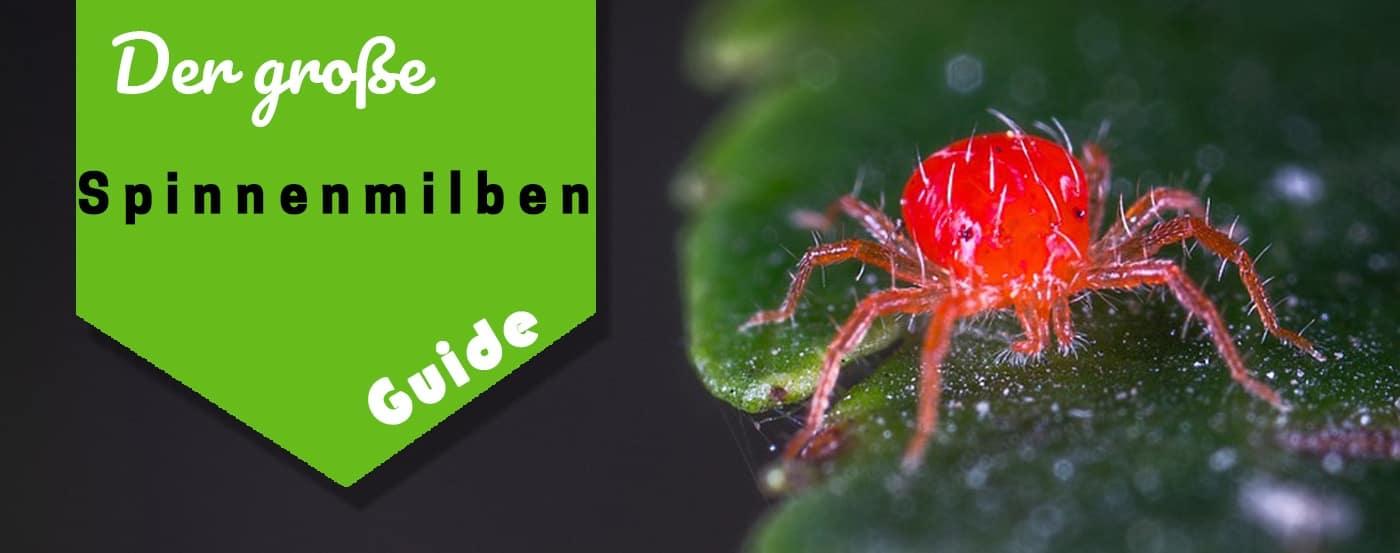 ᐅder Große Spinnmilben Artikel ᐅ So Wirst Du Sie Los