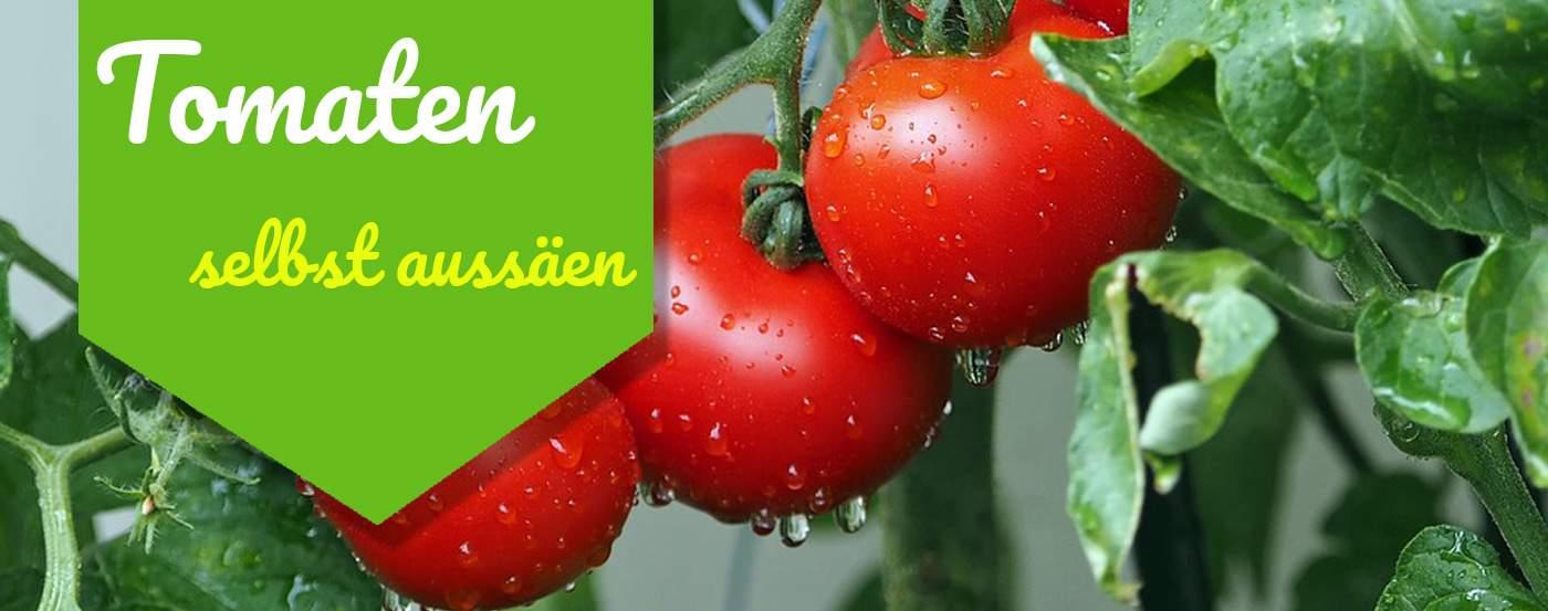 ᐅ Tomaten Selbst Aussaen 2019