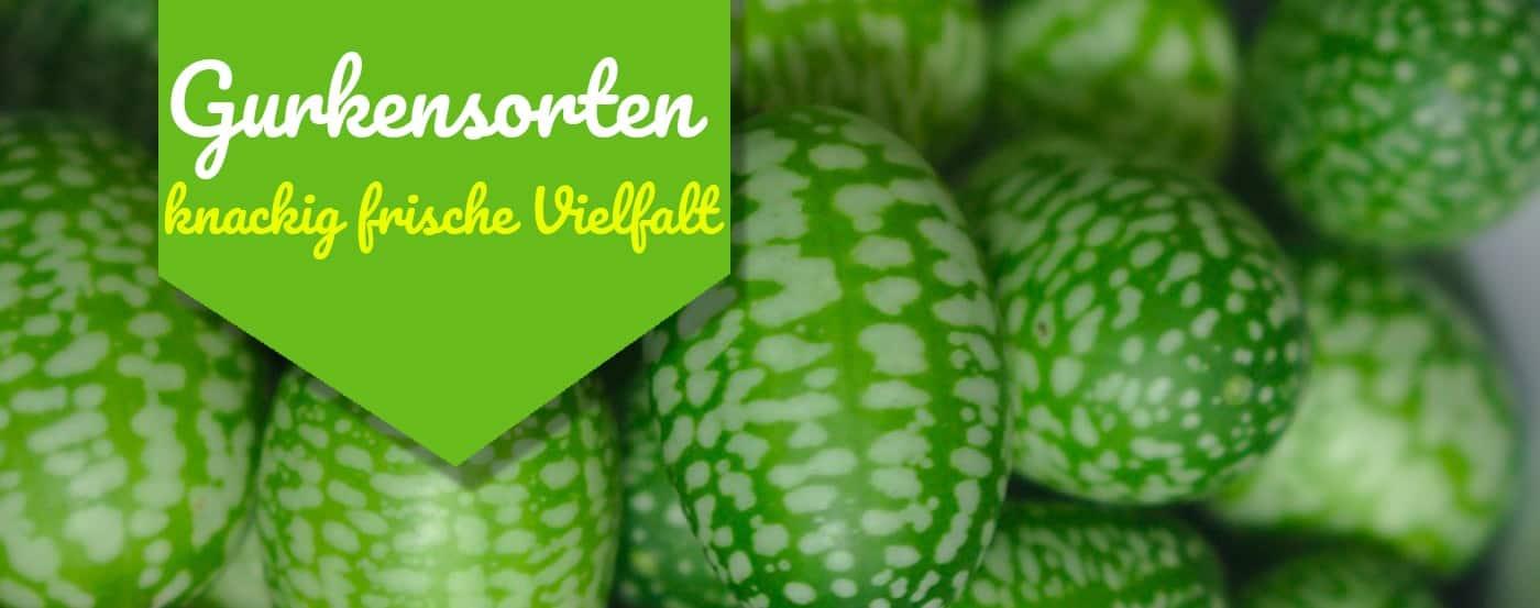 Fabelhaft ᐅ】Das sind die wichtigsten Gurkensorten und ihre Eigenschaften &FF_67
