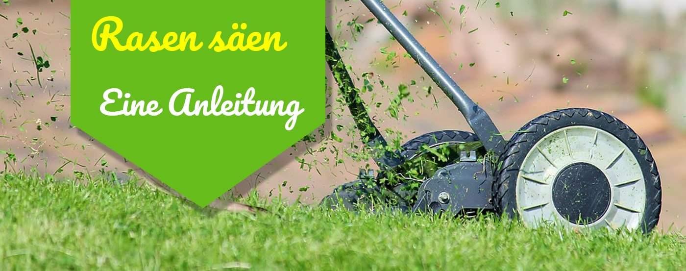 ᐅneuen Rasen Säen Anlegen übersichtliche Anleitung