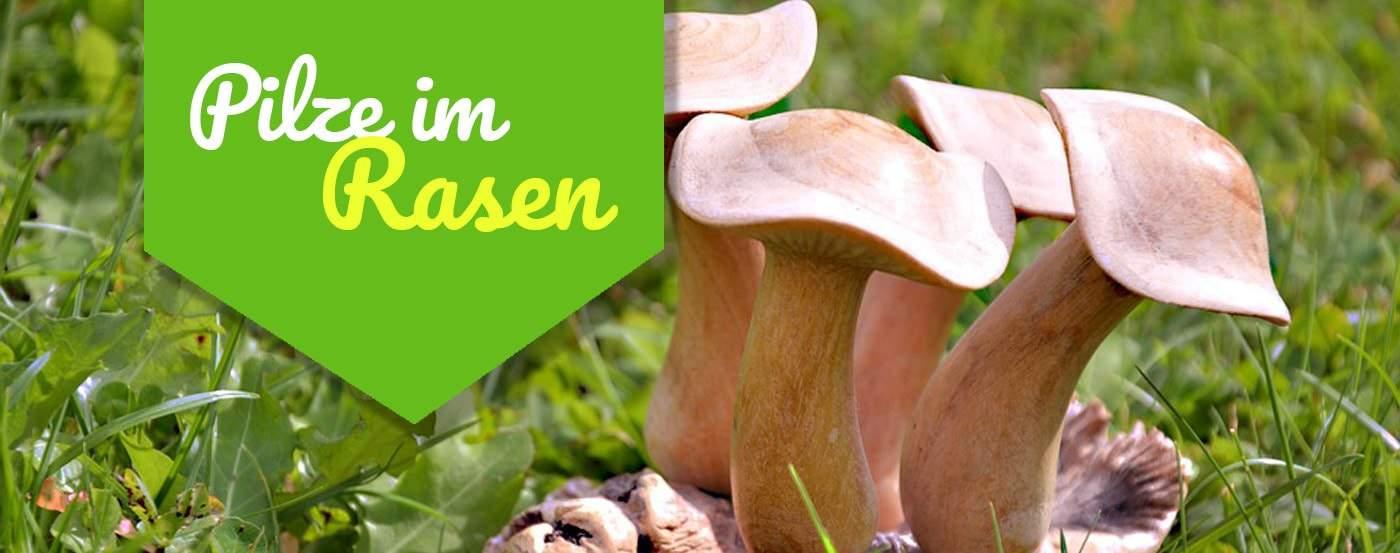 ᐅ Deshalb Hast Du Pilze Im Rasen ᐅ So Wirst Du Sie Los