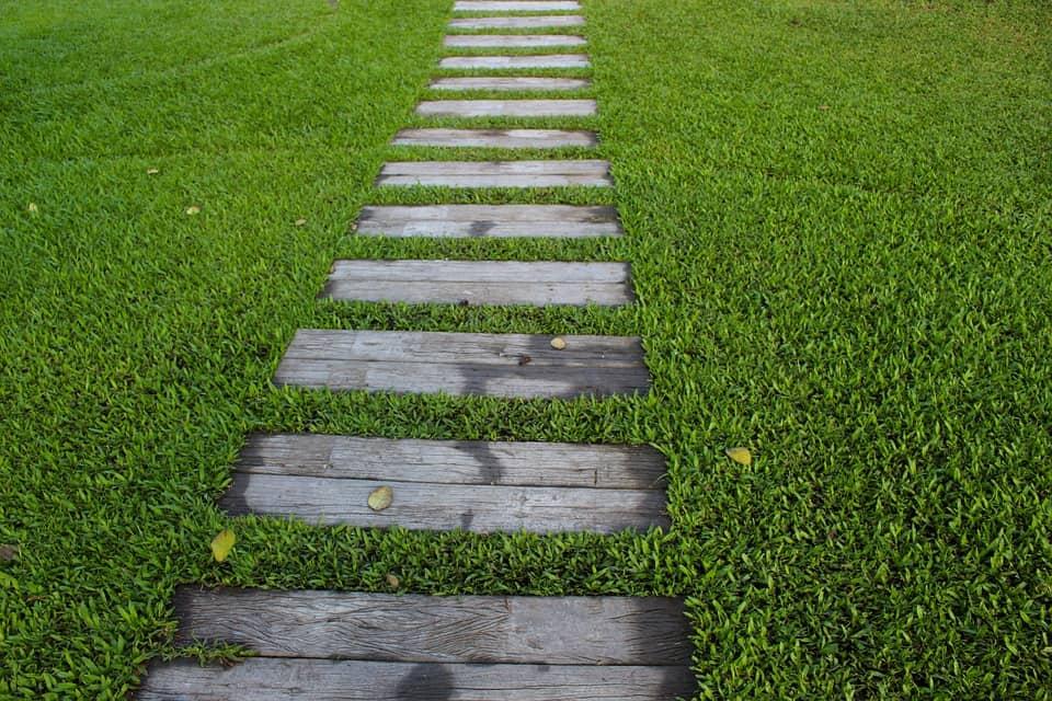 ᐅwann Sollte Man Den Rasen Vertikutieren ᐅ Eine Antwort
