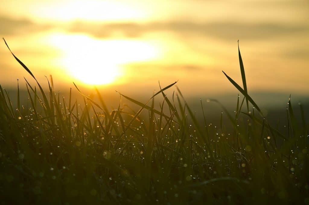Sonnenuntergang mit Rasen im Vordergrund