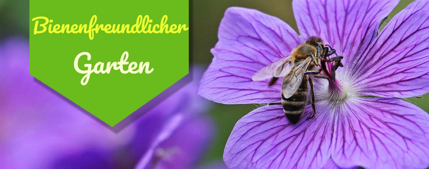 Tipps guides for Bienenfreundlicher garten