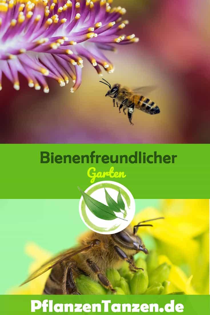 Bienenfreundlicher Garten – 10 Schritte zum aktiven Bienenschutz
