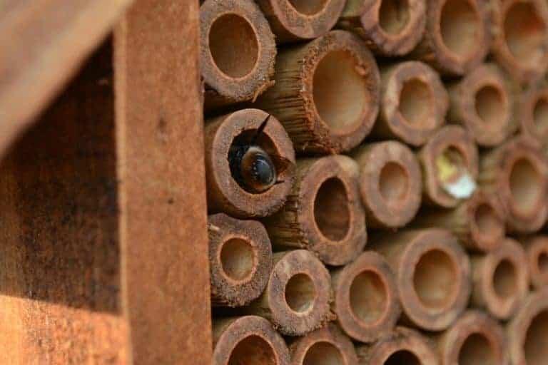 Biene klettert in Bambushaus