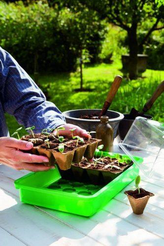 Kleines Gewächshaus wird bepflanzt